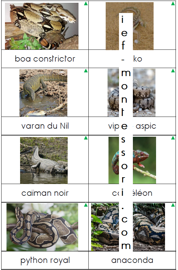 classification animale